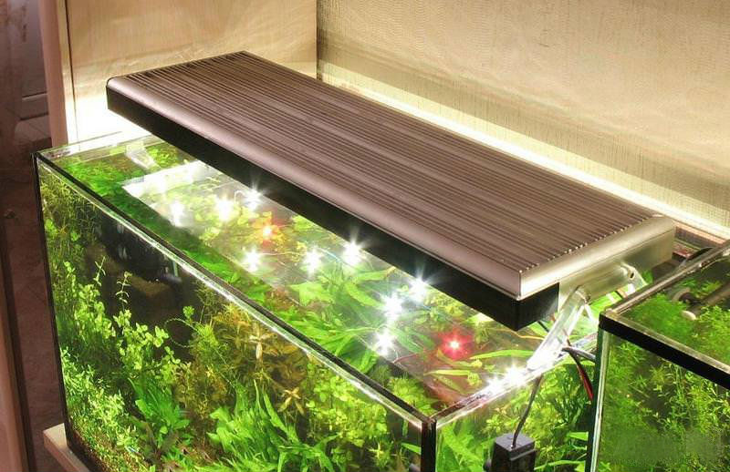 Как выбрать лучшее освещение для аквариума с растениями и все об этом!