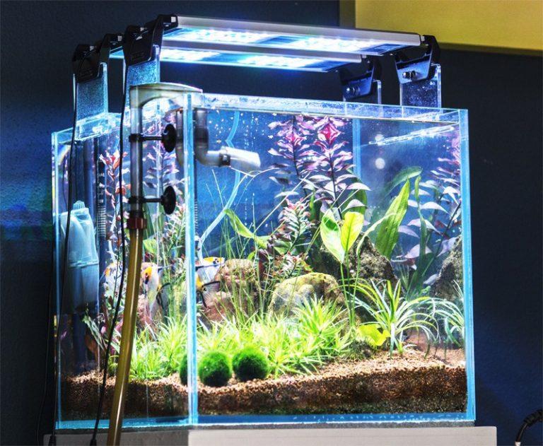 Светодиодное освещение аквариума. светодиодные лампы и ленты для аквариума. расчет светодиодного освещения для аквариума