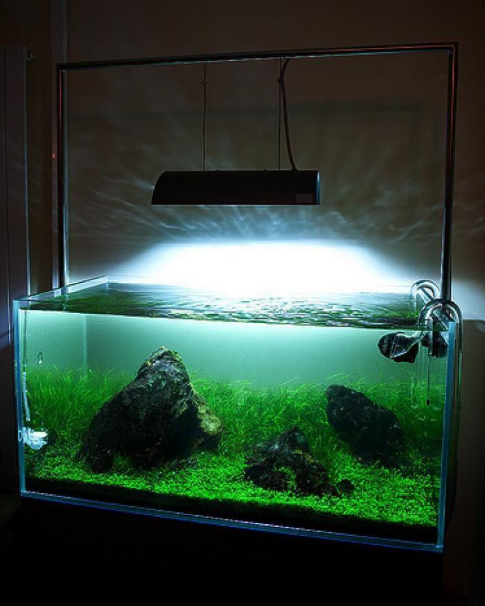 Как рассчитать освещение в аквариуме